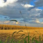 Bio Fuels or Bio-Fools?