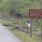 Hikers and Bikers: Beware of 'Gators!