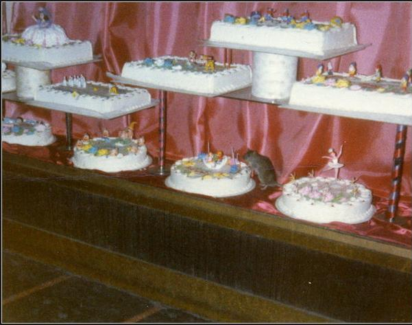 A rat gets his sugar fix in a 42nd Street subway bakery in 1978 - arguably subway rats' heyday. Photo via the New York Times, credit: Vivian Sonnenfeld-Gaines