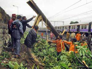 A tree falls on the tracks near Dadar station due to heavy rain. Photo via Mid Day.