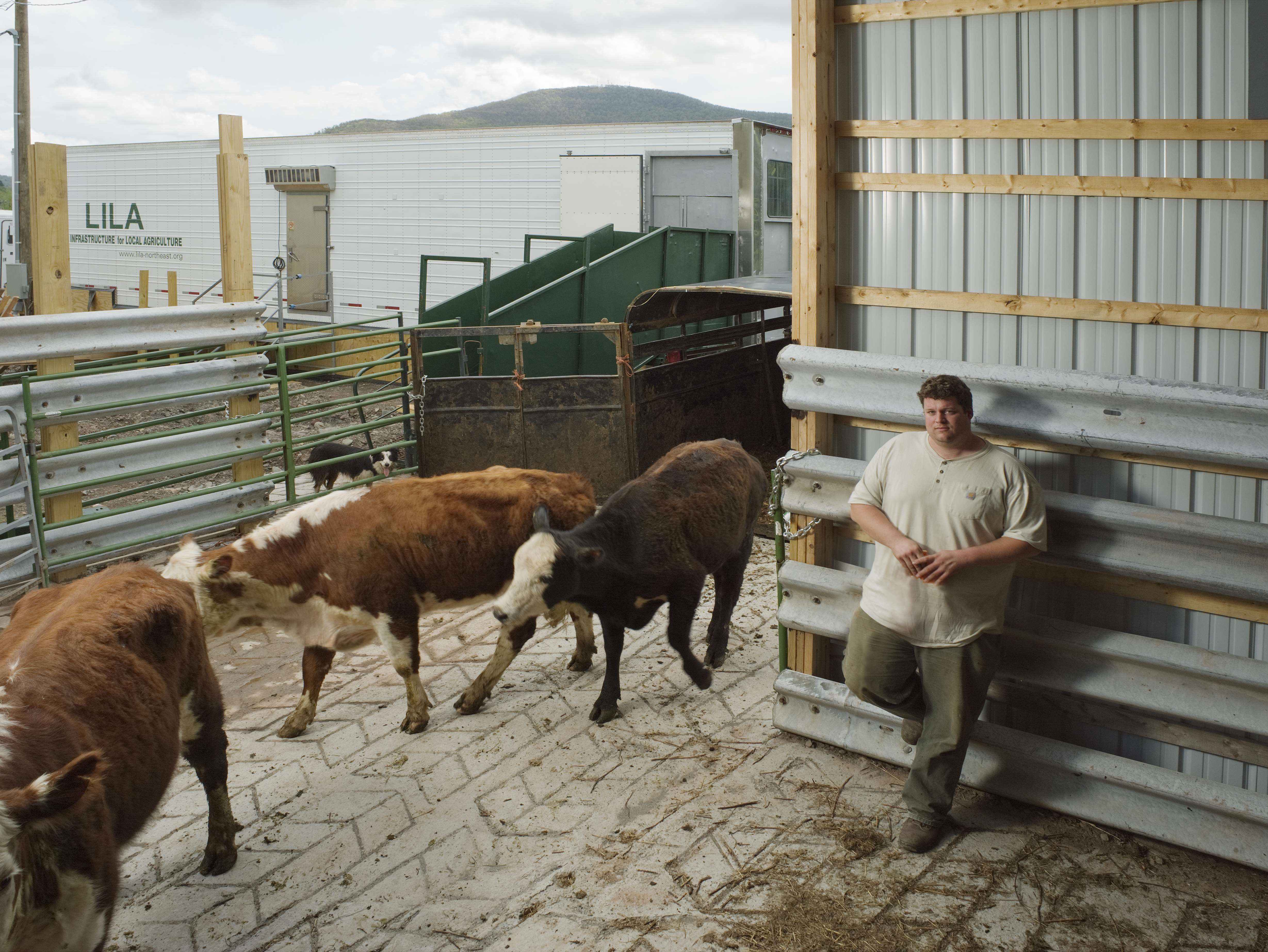 Operator Jim Eklund in Stamford, NY. In background is the mobile slaughterhouse overseen by Local Infrastructure for Local Agriculture (LILA) an affiliate of Glynwood. Photo by Glynwood.