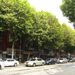 Urban Green Space Key in Improving Air Quality
