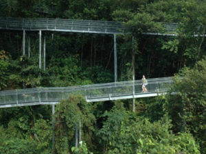 """Innovative """"park connectors"""" through the urban tree canopy have helped Singapore become """"a city in a garden."""" Photo courtesy of Biophilic Cities Project."""