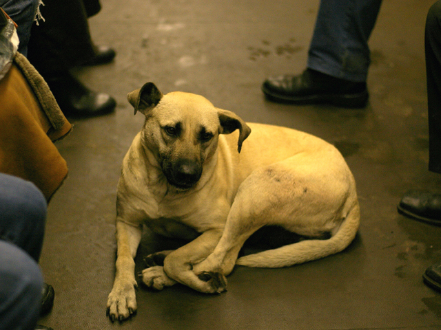 Dogs ride the Moscow Metro, too! Photo by Adam Baker/Flickr.