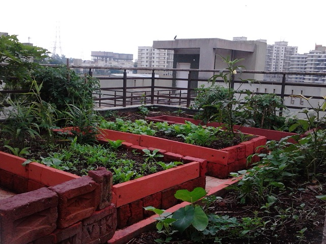 An urban garden in Pune, India