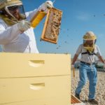 Many cities, like Washington D.C., are picking up beekeeping to both combat declining bee populations and help boost local agriculture and business. (USDA Photo by Lance Cheung)
