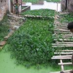In Gorakhpur, India, Citizens Use Nature to Rein in Floods