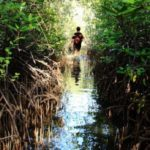 5 Strategies that Achieve Climate Mitigation and Adaptation Simultaneously